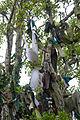 Seir Kieran St. Ciaran's Bush Hanging Bra 2010 09 09.jpg