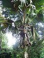 Seychelles-palmera2.jpg