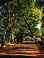 Shadows of Copper Pod trees 01.jpg