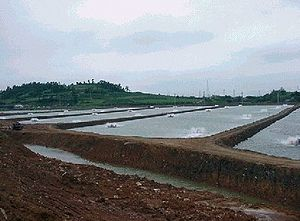 Shrimp farming - Shrimp grow-out pond on a farm in South Korea