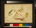 Sidney Hall - Urania's Mirror - Lacerta, Cygnus, Lyra, Vulpecula and Anser - original.tif