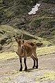 Sierra de Gredos 27-06-2010 14-21-24 2592x3888.jpg