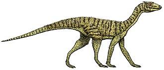 Dinosauromorpha - Image: Silesaurus opolensis flipped