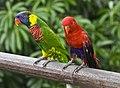 Singapore - Jurong Bird Park-42and (4478192693).jpg