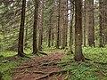 Sippulanniemi nature trail 2.jpg