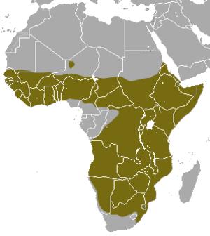 Slender mongoose - Image: Slender Mongoose area