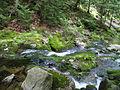 Slide Mtn Brook Trail to Big Slide Mtn.jpg