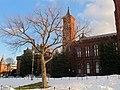 Smithsonian Museum tree.jpg