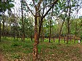 Snap from Peechi Forest area 140214.jpg
