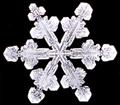 Snowflake11.png