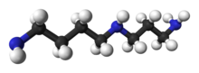 Ball and stick model of spermidine