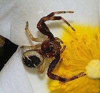 Spider April 2008-8.jpg