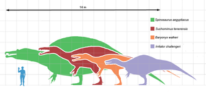 Jurassic Park III - Size comparison of Spinosaurus (green), Suchomimus (red), and Baryonyx (orange) with a human