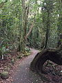 Springbrook National Park 01.JPG