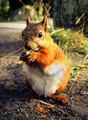 Squirrel eating nuts.png