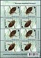 Stamp of Belarus - 2019 - Colnect 875674 - Great Diving Beetle Dytiscus marginalis.jpeg