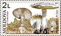Stamp of Moldova 057.jpg