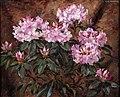 Stanisław Ejsmond - Różowy rododendron 1925.jpg