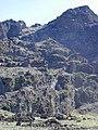 Starr-031001-0099-Artemisia mauiensis-habit-Puu Kumu HNP-Maui (24376794810).jpg