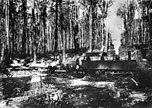 Fraser Island-Logging-StateLibQld 1 78105 McKenzie's Tramway Locomotive, Fraser Island, Queensland, ca. 1920