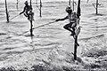 Stick Fishermen Of Sri Lanka (236979757).jpeg