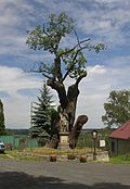 Stochov CZ St Wenceslas Oak 0023.jpg