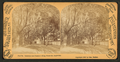 Sunshine and shadow, King Street, St. Augustine, Fla, from Robert N. Dennis collection of stereoscopic views.png