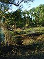 Surreal swamp.jpg