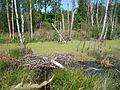 Svente Parish, LV-5473, Latvia - panoramio - alinco fan (1).jpg