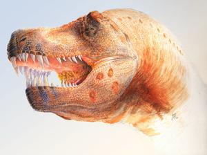 Trichomonas - Restoration of a Tyrannosaurus with Trichomonas-like infections.