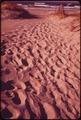 TRACKS ACROSS SAND DUNE - NARA - 547607.tif