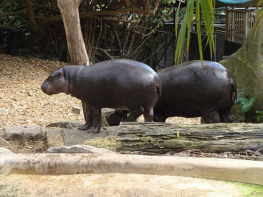 Taronga Zoo (6182006973)