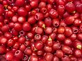 Taxus yew fruit 1430733 Nevit.jpg