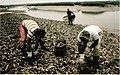 The 1990 national shellfish register of classified estuarine waters (1991) (16485595169).jpg