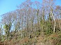 The Beeches - geograph.org.uk - 1690365.jpg