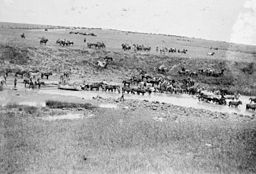 The Second Boer War, 1899-1902 Q72297.jpg