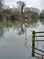 The Thames near Dorchester - geograph.org.uk - 640142.jpg
