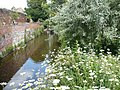 The river Stour running through the Franciscan gardens near Greyfriars, Canterbury - geograph.org.uk - 866810.jpg