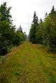 The road not taken (1064639450).jpg