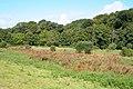 Thorne St Margaret, Rewe Mead Nature Reserve - geograph.org.uk - 57799.jpg
