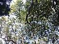 Through the leaves.jpg