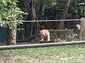 Tigers in Zoo Negara Malaysia (31).jpg