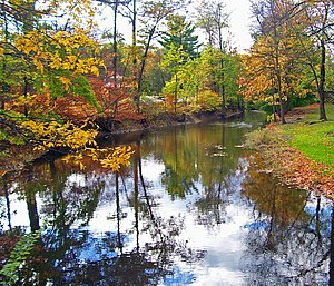 Tin Brook - Tin Brook in Walden's Wooster Memorial Grove