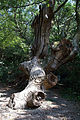 Tokushima castle09s3872.jpg