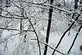 Tokyo snow 2013Jan14 - Flickr - odako1 (2).jpg