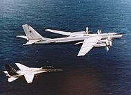 Tomcat escorts Bear.jpg