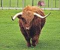 "Toro ""Highland"".jpg"