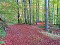 Track in Tornat Wood - geograph.org.uk - 1289077.jpg