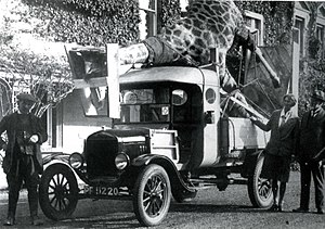 Rowland Ward - Transporting a giraffe to the Powell-Cotton Museum.