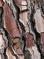 Tree Bark (35254676730).jpg
